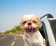 roadtrip 80x66 - 7 Tips To Stay In Hotels With Your Dog