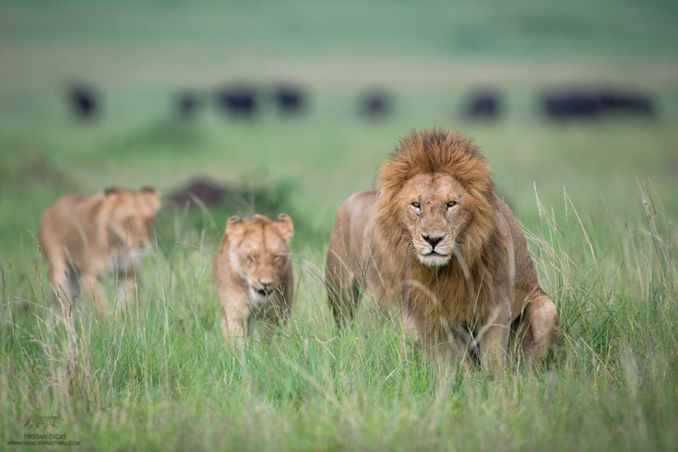 SafariLive - 20 Amazing Places You Can Visit this Year Without Leaving Your Home
