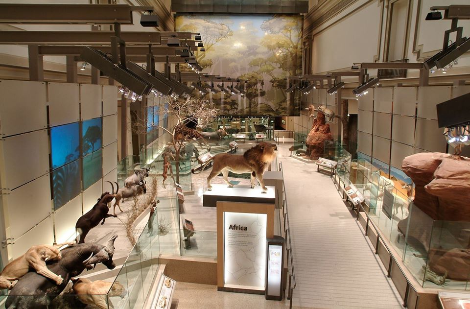 The National Museum of Natural History - 20 Amazing Places You Can Visit this Year Without Leaving Your Home